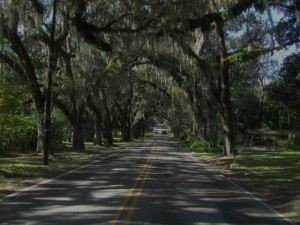 A street tunnel from spreading oak trees and Spanish moss