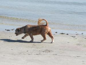 This little pooch was enjoying a romp on the sand