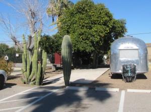 Cactus and grapefruit