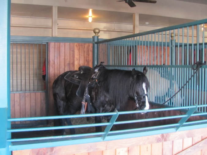 """""""King"""" ready to perform in the Dixie Stampede"""