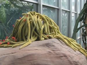 Strange cacti in the desert hall